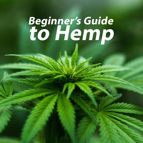 Beginner's Guide to Hemp
