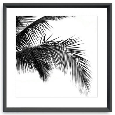 framed black and white palm prints in 3 styles
