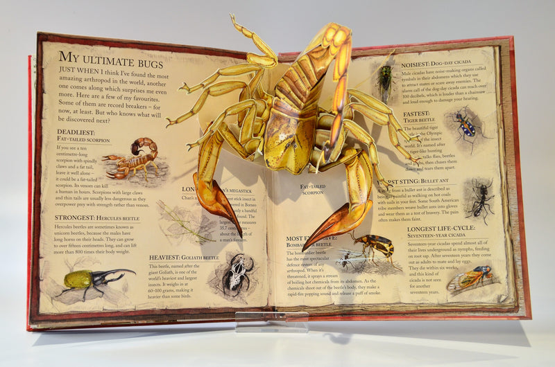 Bugs Pop Up Book 1