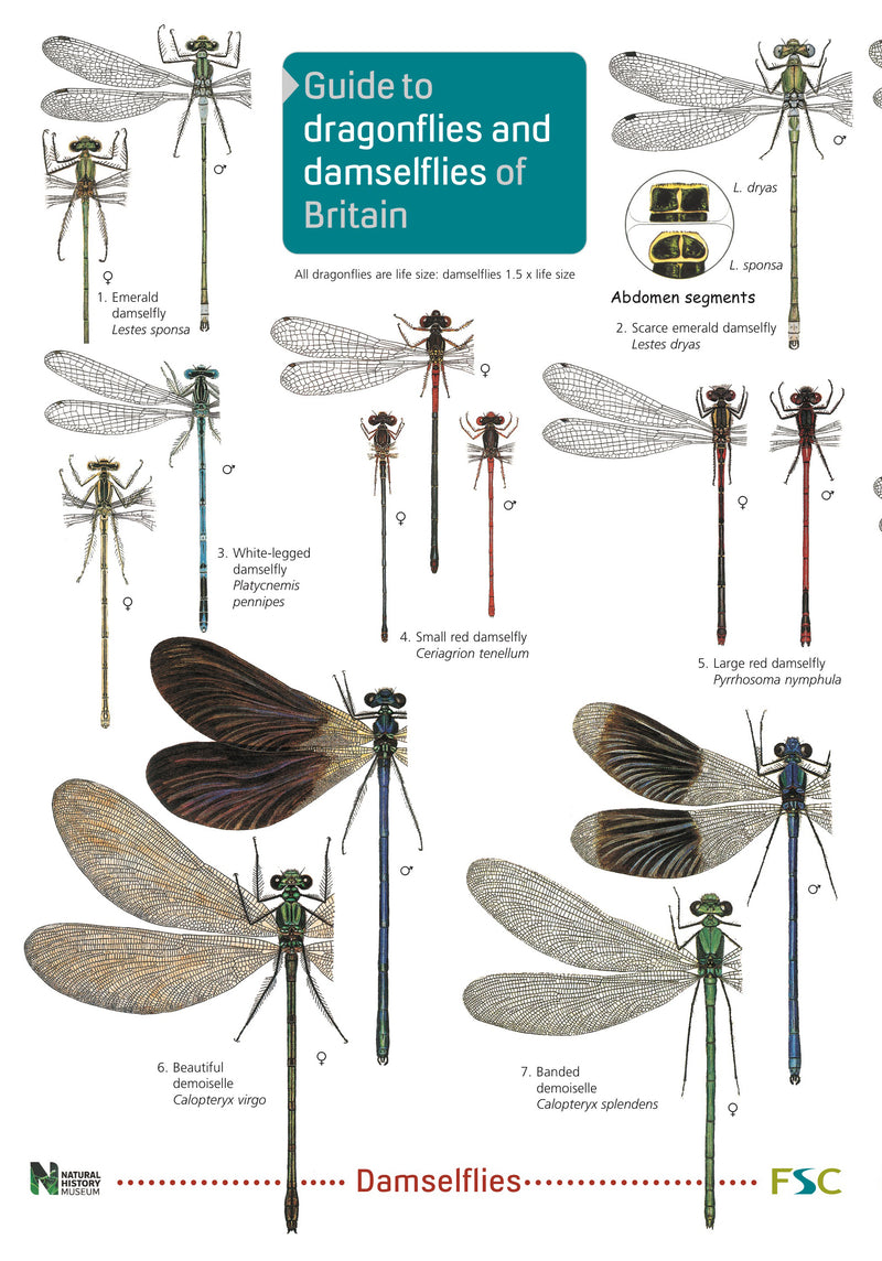 Dragonflies and Damselflies 1