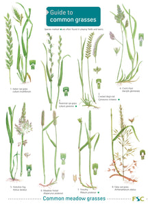 Guide to Common Grasses 1