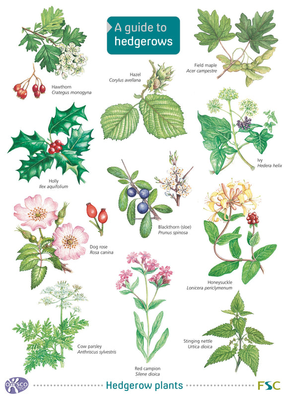 Guide to Hedgerows 1