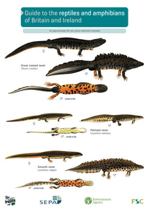 Reptiles and Amphibians 1