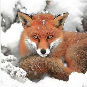 Wildlife Trust Pack of 10 Christmas Cards