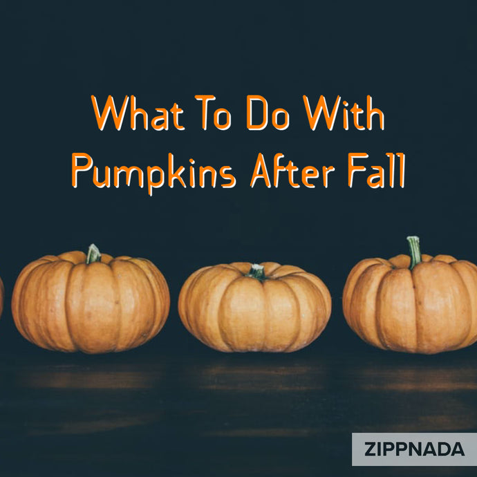 What To Do With Pumpkins After Fall