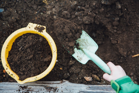use old coffee grounds in composting, coffee ground plant benefits