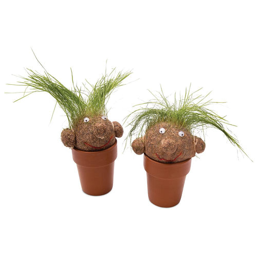 Pot Head | Grass Growing Plant