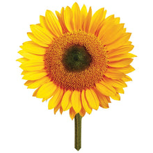Load image into Gallery viewer, Giant Sunflower | Grow Your Own