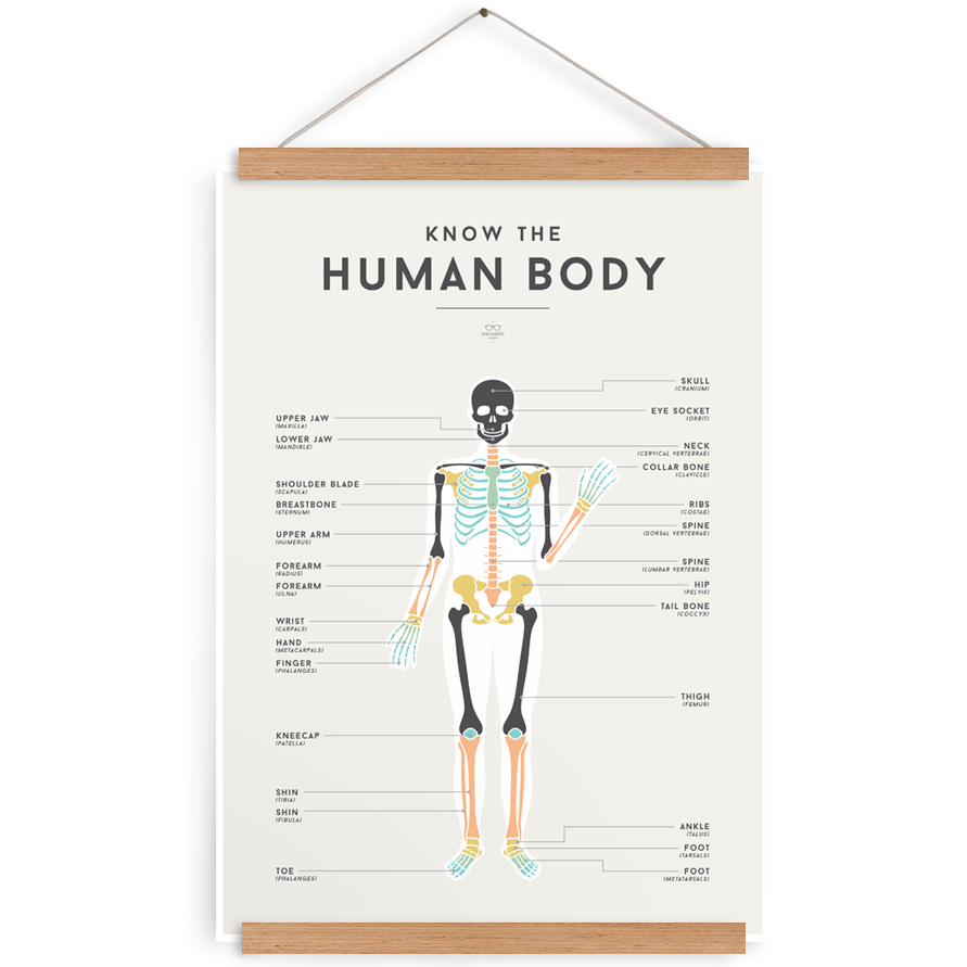 Squared Charts | Human Body