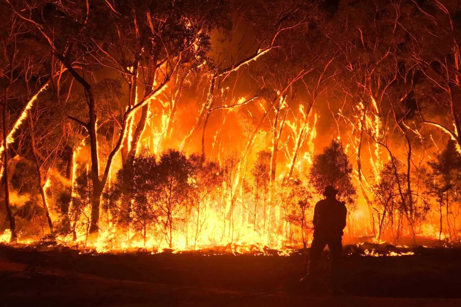 Australia is on fire, this is how you can help