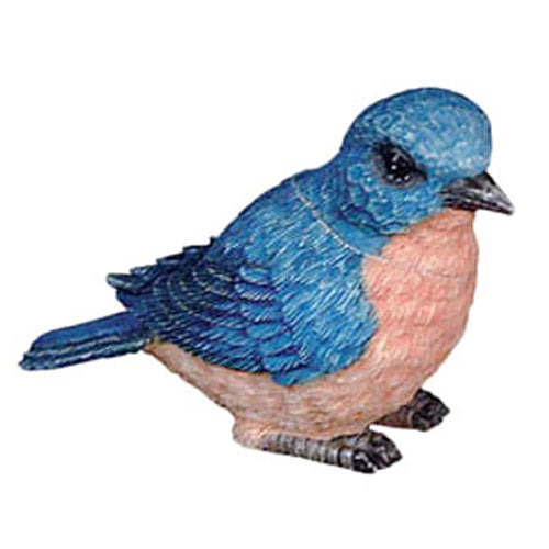 bluebird pot belly