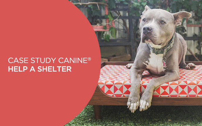 Buy A Pet Daybed, Help a Los Angeles Shelter