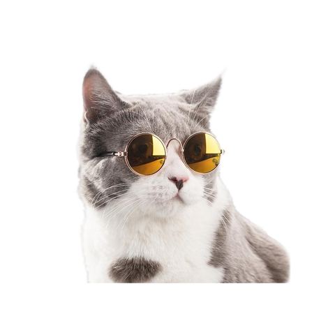 Sunglasses for Pets