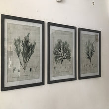 Load image into Gallery viewer, Set of 3 Botanical Prints