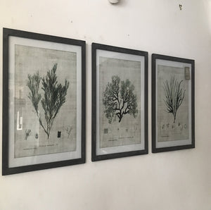 Set of 3 Botanical Prints
