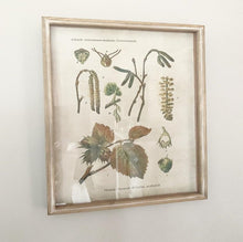Load image into Gallery viewer, Botanical Shadow Box