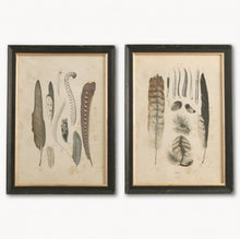 Load image into Gallery viewer, Pair of Feather Prints