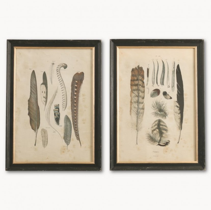 Pair of Feather Prints