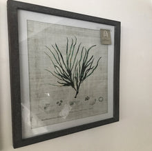 Load image into Gallery viewer, Set of 3 Botanical Prints - www.proven-salle.com