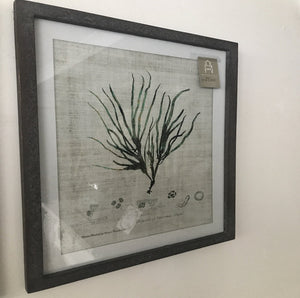 Set of 3 Botanical Prints - www.proven-salle.com