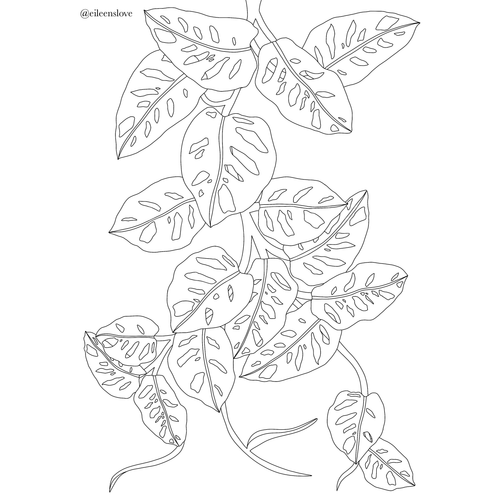 Free Monstera Adansonii Colouring In Page
