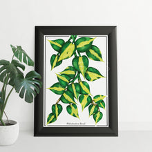 Load image into Gallery viewer, FREE Philodendron Brasil Colouring Page