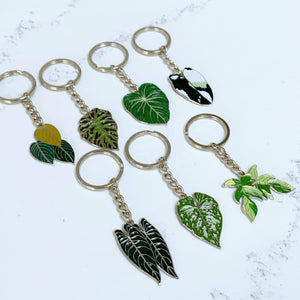 The Complete Philodendron Set