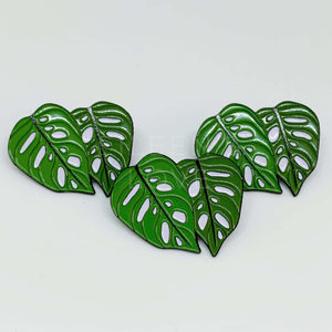 Monstera Adansonii Pin