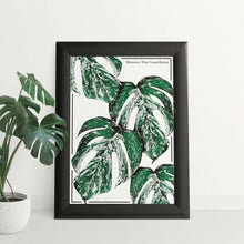 Load image into Gallery viewer, Monstera Thai Constellation