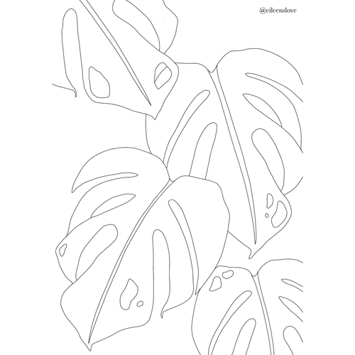 Free Monstera Thai Constellation Colouring In Page