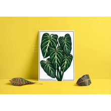 Load image into Gallery viewer, Philodendron Gloriosum