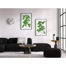 Load image into Gallery viewer, Philodendron Brasil