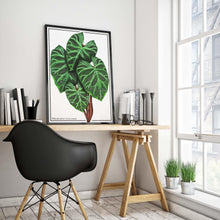Load image into Gallery viewer, Philodendron Verrucosum