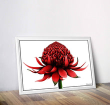 Load image into Gallery viewer, Waratah