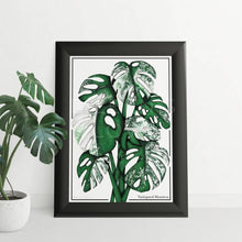 Load image into Gallery viewer, Variegated Monstera