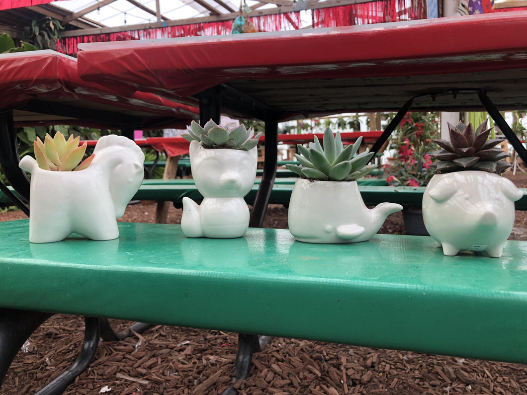 White ceramic animal planter with live succulent - local pickup only Plant Parkesdale Market