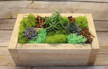 Load image into Gallery viewer, Mother's Day Succulent planter