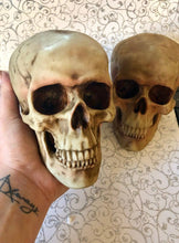Load image into Gallery viewer, Realistic Skull Replicas.