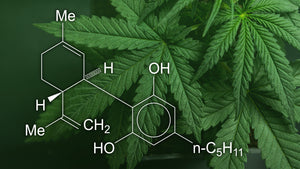 Why Do People Use CBD?