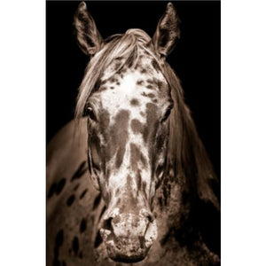 Tan Horse Art - 13 Hub Lane   |  Wall Art