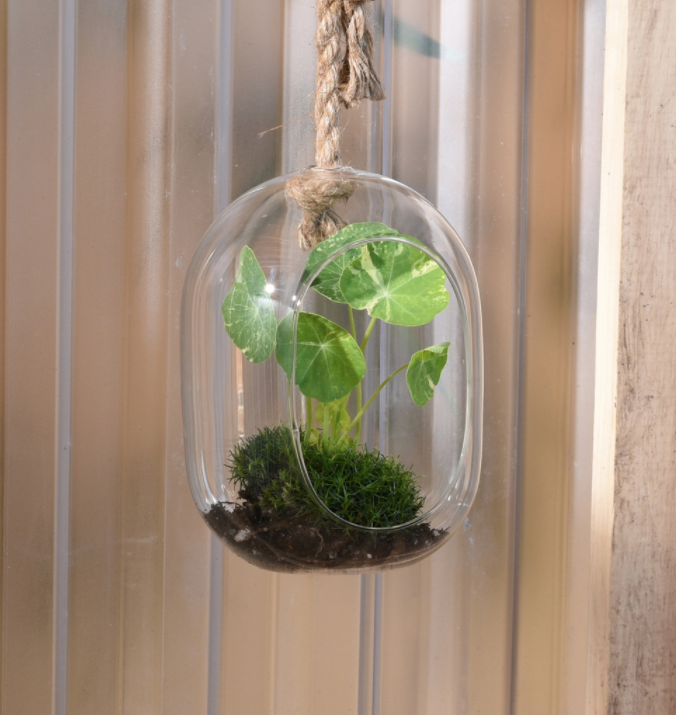 Sole Hanging Terrarium