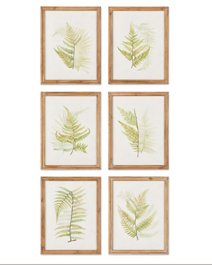 Framed Fern Study - 13 Hub Lane   |