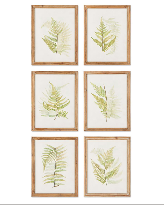 Framed Fern Study