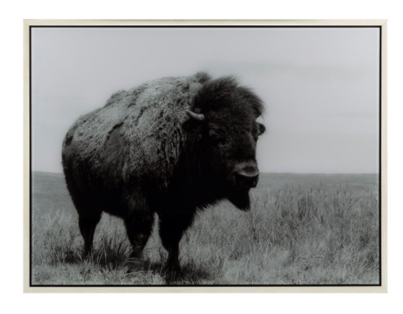 Buffalo Acrylic Wall Decor