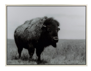Buffalo Acrylic Wall Decor - 13 Hub Lane   |