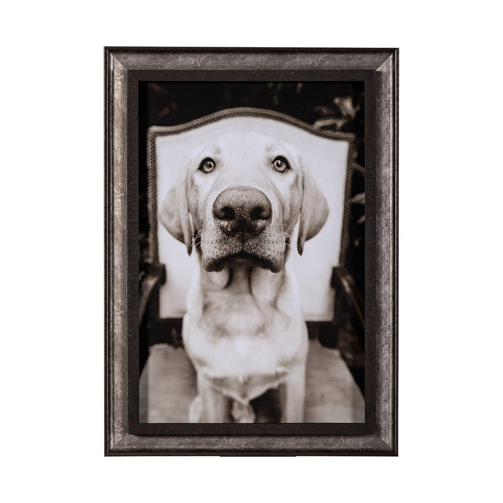Sitting Golden Lab - 13 Hub Lane   |