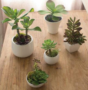 Artificial Succulents with White Ceramic Pots - 13 Hub Lane   |