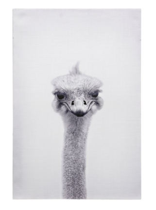 Ostrich Portrait Canvas Art - 13 Hub Lane   |