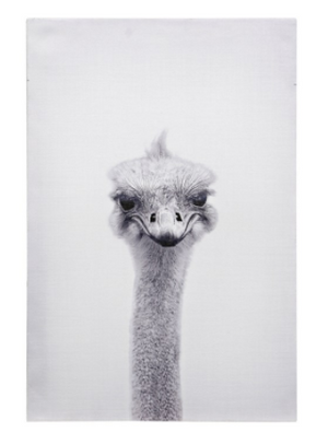 Ostrich Portrait Canvas Art