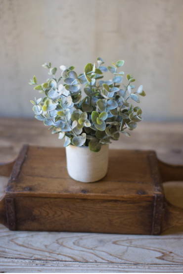 Boxwood Sage Plant in Concrete Pot - 13 Hub Lane   |